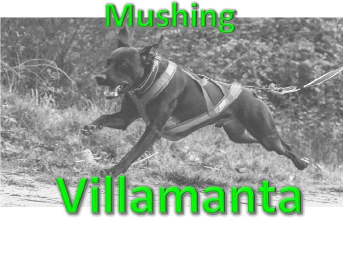Copa de España Mushing Villamanta , 16 y 17 de Enero de 2021